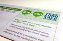 New York Restoration Project 1,000 Trees